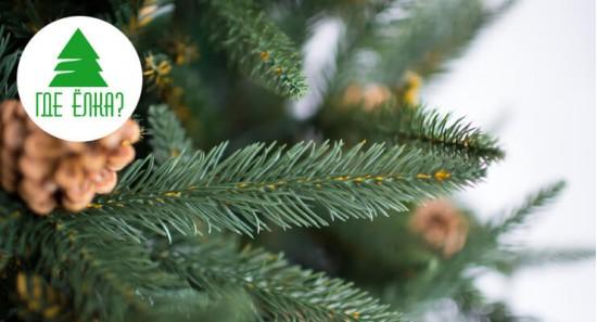 Искусственная или живая елка?